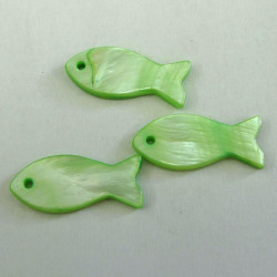 Green shell fish. Pack of 3